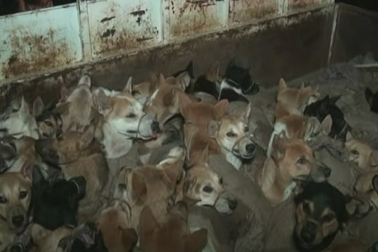 The street dogs tied up and stuffed into the truck that met with an accident in Assam. (Image: News18)