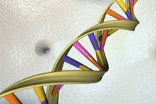 DNA Data Banks to be Set up Nationally, Leaking Information Invites 3 Years' Jail and Rs 1 Lakh Fine