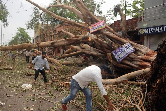 People clearing a road in Agra that was blocked by a tree that fell during Wednesday night's massive storm. (PTI Photo)