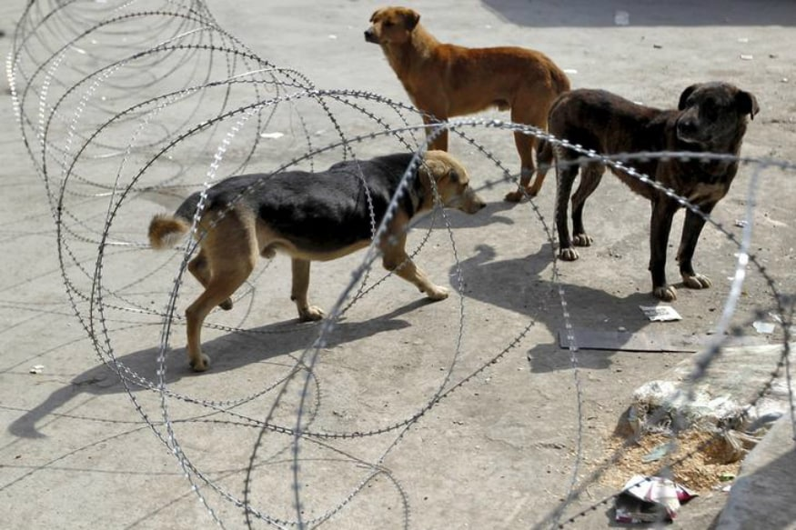 Dog that Bit 25 in Karachi Dead as Pakistan Grapples With Shortage of Anti-Rabies Vaccine