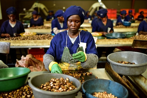 A woman breaks raw cashew nuts at a cashew nuts processing factory in the central Ivorian city of Bouake. (Image: AFP Relaxnews)