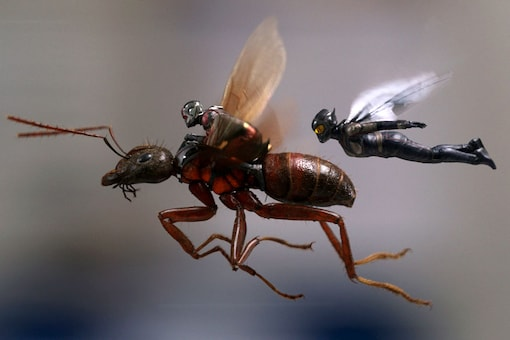 """This image released by Marvel Studios shows a scene from """"Ant-Man and the Wasp."""" (Image: AP)"""
