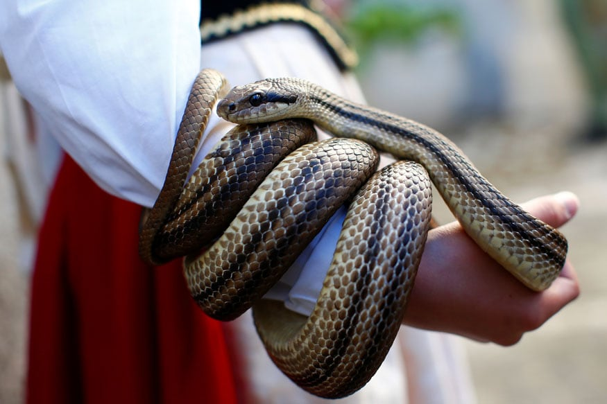 World Snake Day 2019: A Snake Will Avenge its Partner's Death and Four Other Myths