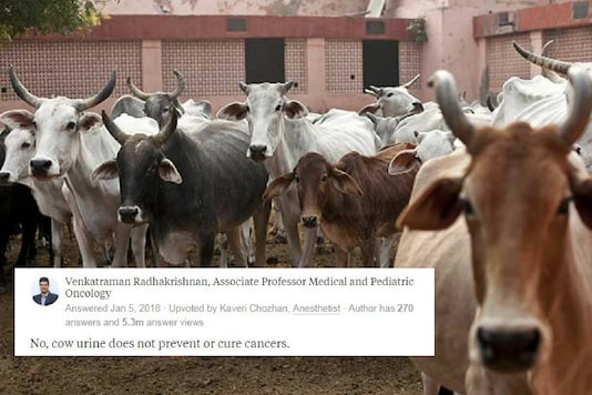 Can Cow Urine Really Cure Cancer? This is What Oncologists Told Us