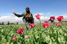 Guns and Roses: Afghan Farmers Enjoy Sweet Smell of Success
