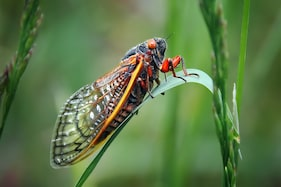 Tourists are Complaining that French Cicadas are 'Too Loud'