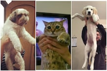 'The Lion King' Fans Recreate Iconic Simba and Raifiki Scene Using Their Pets and It's All Kinds Of Adorable