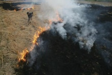 Deny Minimum Support Price Scheme to Farmers Involved in Stubble Burning, NGT Tells States