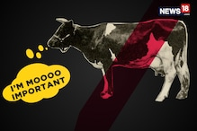Adopt A Cow, Get Awarded: Cow Politics In India
