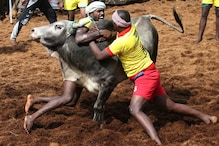 15 Breathtaking Photos from Tamil Nadu's Jallikattu Festival