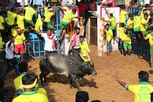 One Killed, Over 60 Injured in Jallikattu Event