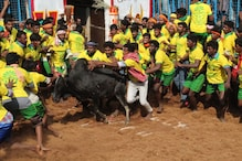 Two Spectators Gored to Death at 'World's Largest' Jallikattu Event in Tamil Nadu