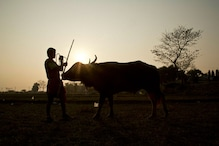 15-year-old Beaten to Death after His Buffalo Damages Crops in UP's Sisaiya Village