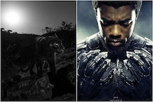Real-life Black Panther Seen for First Time in 100 Years Near Fictional Location of Wakanda