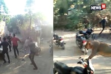 Lioness Charges Through Crowd In Gujarat