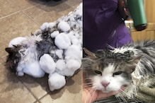 Frozen Feline: A Cat Who Was Found Frozen In The Snow Recovers As Ice Thaws