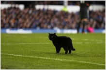 Lucky or Unlucky? Black Cat Stopped Play for 4 Minutes During Everton vs Wolves Game