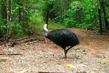 Angry Birds: 'World's Most Dangerous Bird' Kills its Owner in Florida