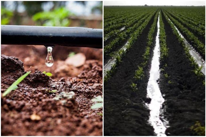 More Crop Per Drop': How PM Krishi Yojana is Making Agricultural