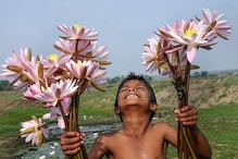 India is a Lotus Garden as Modi Repeats Indira Feat to Gift 5 More Years of Acche Din to BJP