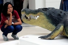 Animals Will Shrink In Size Over Next 100 Years, Some May Even Go Extinct: Study