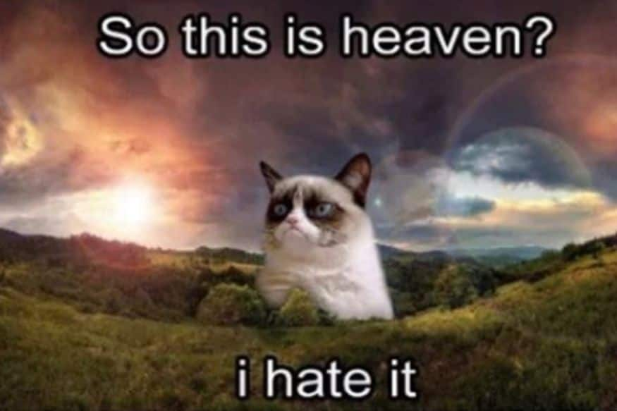 Grumpiest Memes Of Grumpy Cat That Brightened Us Up On Our