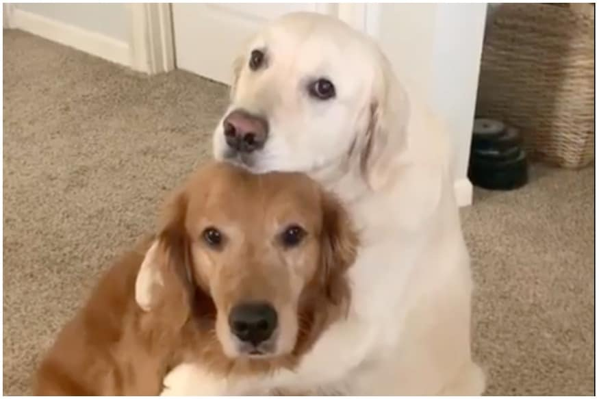 Paw'tch Up: Adorable Dog Hugs Sibling After Stealing His Food, Video is Making 'Gramers Go 'Aww'