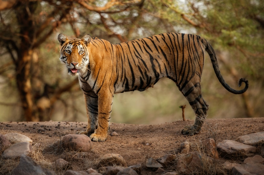 Electronic Eye Surveillance in Corbett Tiger Reserve from Wednesday for Better Wildlife Management