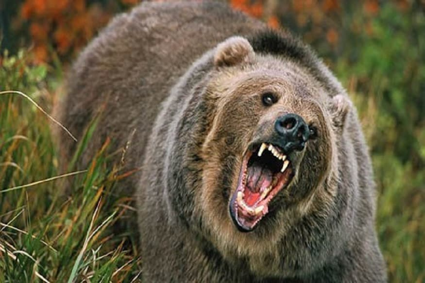 Russian Man Who Joked About Being Eaten by Bear Devoured Alive by Bear