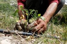 Tripura Govt Plants 6,500 Saplings in One Minute on 'Van Mahotsava'