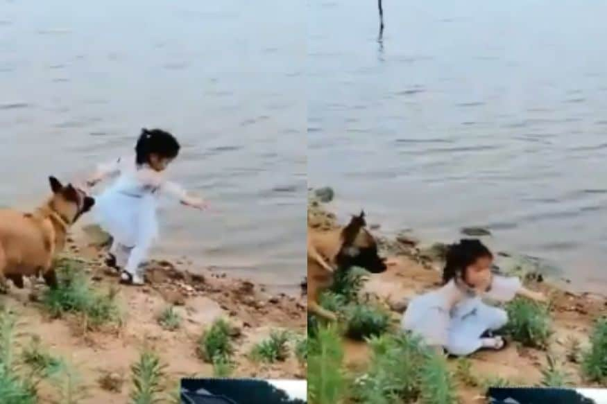 Dog Saves Girl from Falling in Water, Internet Calls Him 'Best Boy'