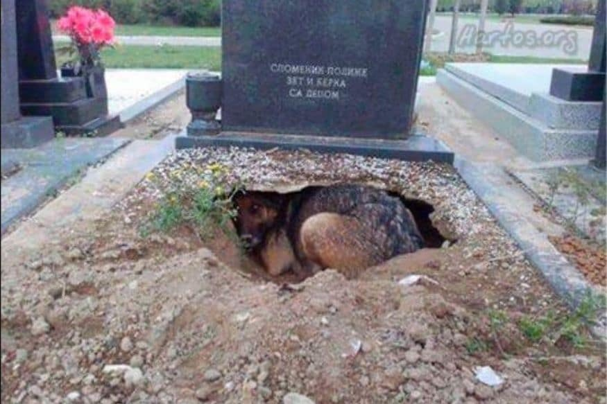 Fact Check: Is this Viral Photo of a Dog Digging a Hole in its Owner's Grave Real?