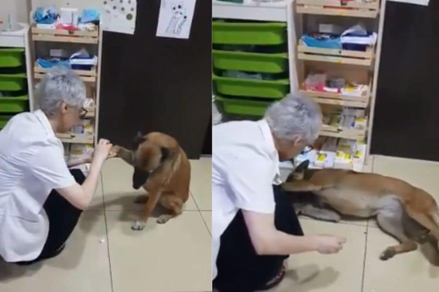 Stray Dog Strolls in Pharmacy, Waits Patiently While Being Treated