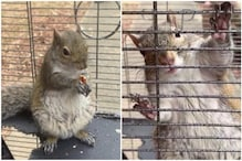 US Man Suspected of Feeding Meth to Keep Illegally Kept 'Attack Squirrel' Aggressive