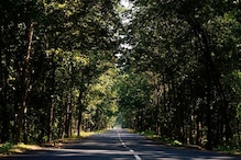 Total Tree, Forest Cover in Country Increased by 5,188 sq km in Last 2 Years: Report