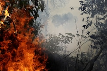 Amazon's 'Tallest Tree' Safe from Fires, Say Scientists