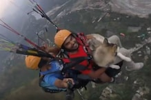 Siberian Husky Paraglides with Owner at 3,500 Feet in Himachal Pradesh