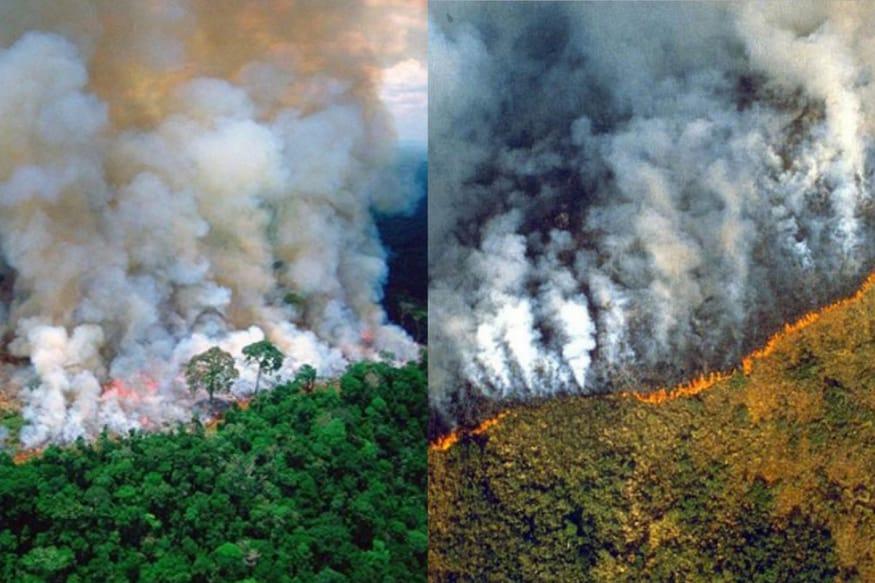Leonardo Dicaprio, Alia Bhatt Fall For Old Photos Going Viral as 'Amazon Rainforest Fire'