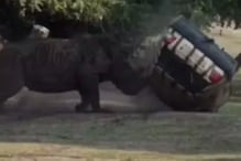 Narrow Escape for German Zookeeper as Raging Rhino Bull Flips Her Car Thrice