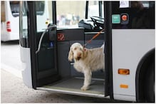 UK Company Comes up with Special Bus Routes for Dogs to Encourage Pet Owners to Travel