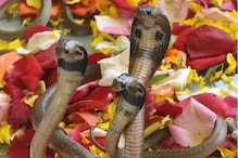 Nag Panchami 2019: Date, Time and Myth Behind the Snake Festival