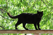 From Black Cats to the Number 13, Here Are Common Myths and Superstitions that Indians Believe
