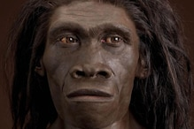 A Simple Case of Ear Infection Could Be the Reason Why Entire Species of Neanderthals Went Extinct