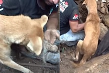 Mother Dog Digs Through Debris to Help Rescuer Find Her Buried Puppies