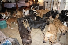Woman Turns Home Into Shelter For Nearly 100 Dogs To Save Them From Hurricane Dorian
