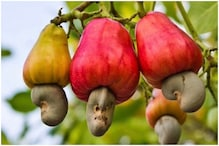 Internet is Just Discovering 'Cashew Apples' and it is Blowing People's Minds