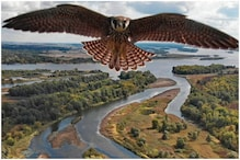 Bird's Eye: Falcon Mistakes Drone for Prey, the Resulting Photo is Stunning
