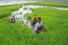 Economic Survey Backs Animal Husbandry, Dairy and Fisheries to Boost Agricultural Sector