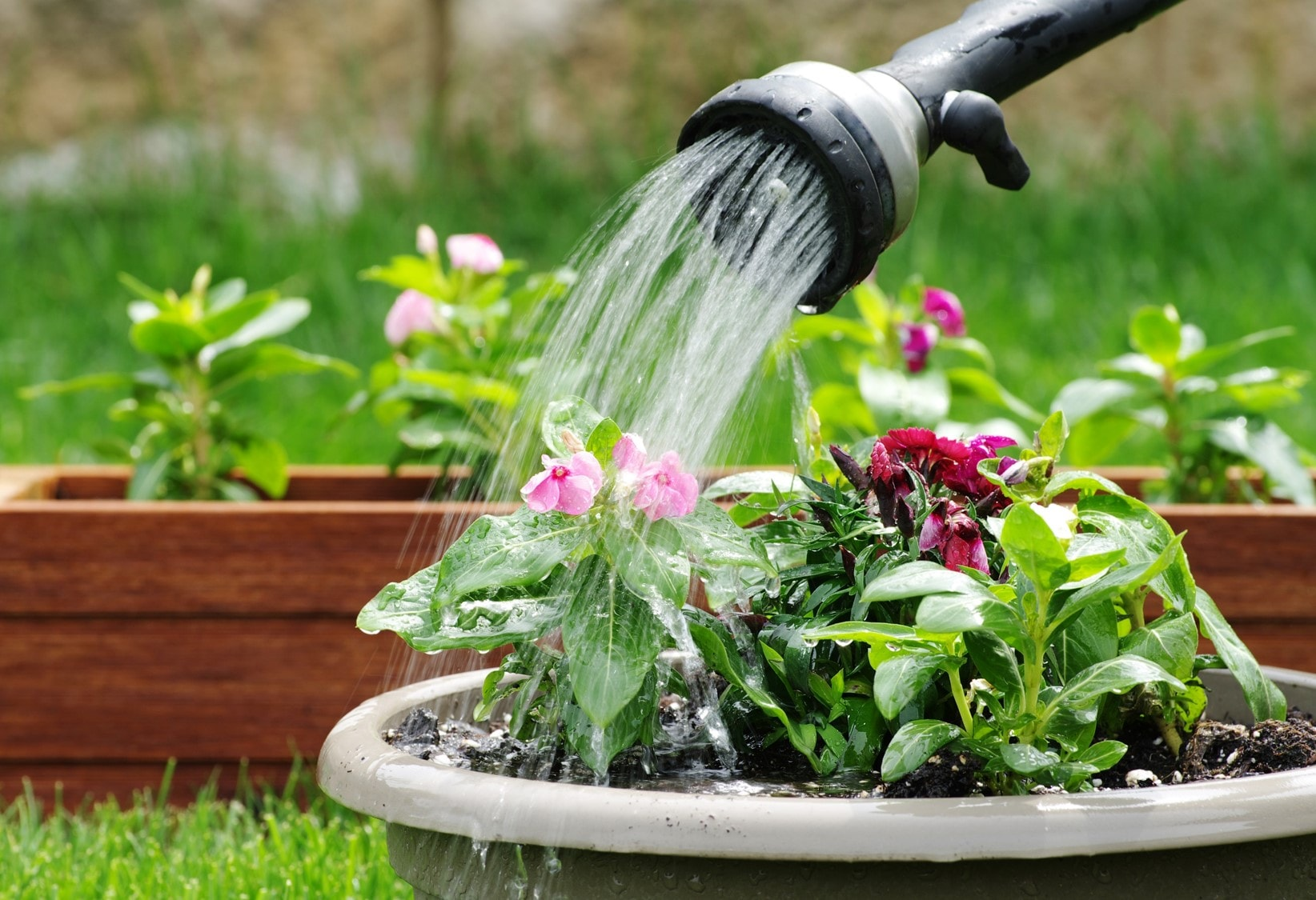 Bathing Pets, Watering Plants: How to Effortlessly Save Water While Performing Simple Tasks