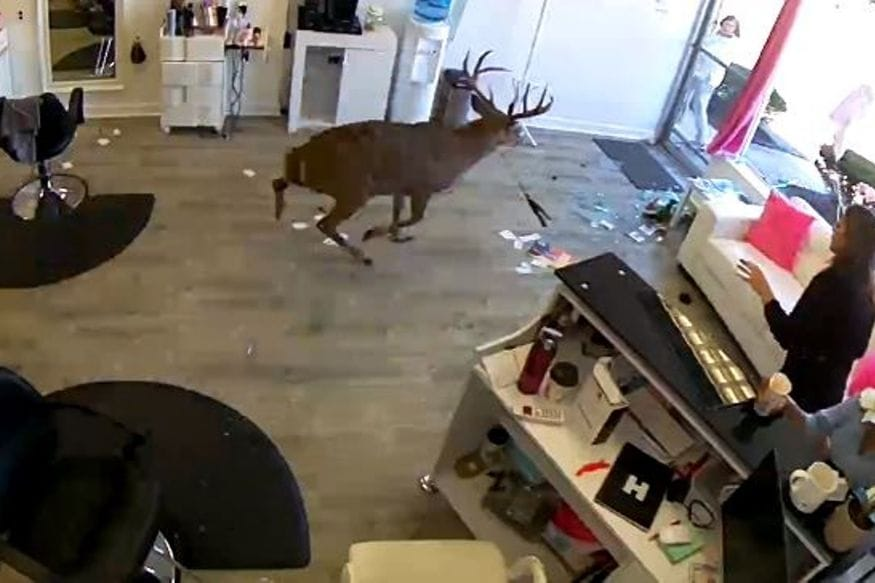 Watch: Deer Crashes Through Salon Window, Leaps Away With a Straightening Iron